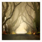 the_dark_hedges___misty_by_klarens_photography-d37ydyy